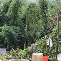 YeYi's back garden